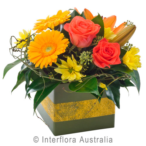 Whimsy - Petite box arrangement - Birthday / Congratulations,Get Well