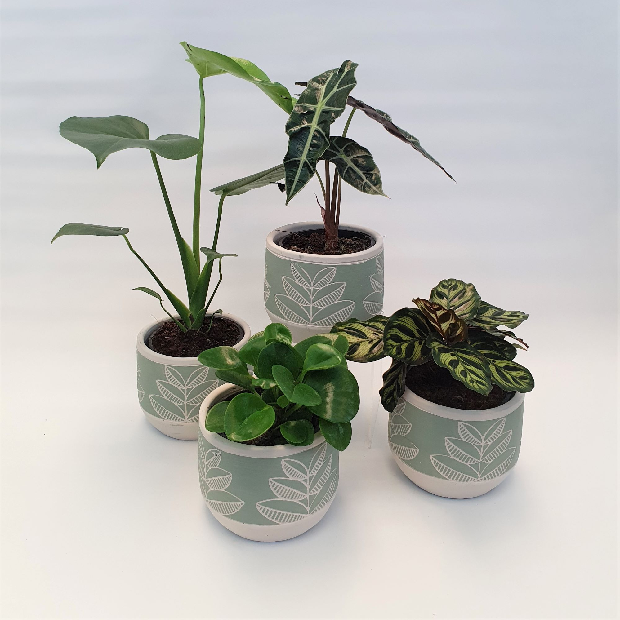 Plantae - Potted indoor plants in a gorgeous ceramic planter - plant types vary according to availability - Anniversary / Romance,Birthday / Congratulations,Get Well,Any Occasion